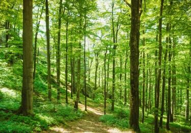 Bezorgdheid landbouwers neemt toe nu deadline nadert voor kandidatuur Nationaal park Grenspark Kalmthoutse Heide
