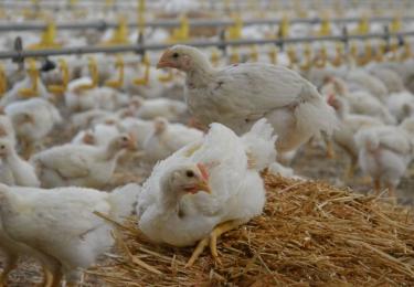 Continental Foods verhoogt ecologische voetafdruk
