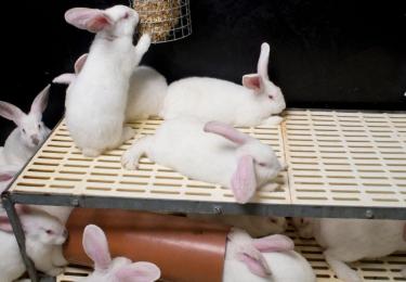 """Deze week zet VLAM konijn als duurzame en hippe vleessoort in de kijker tijdens """"De week van het konijn"""" (29 jan – 5 feb) - ondanks protest van dierenrechtenorganisaties"""