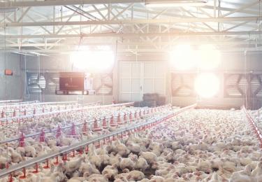 Evaluatie van geuremissiefactor vleeskippen