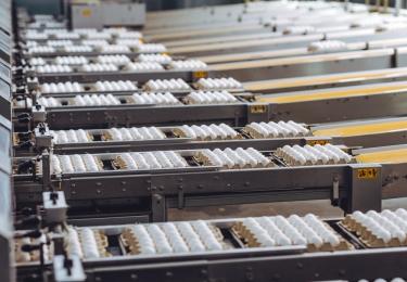 Grootste Oekraïnse eierproducent krimpt productie sterk in