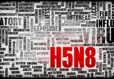 H5N8-vogelgriep duikt opnieuw op in Rusland