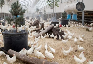 Kipsterstal dient vergunningsaanvraag in voor eerste stal op Belgisch grondgebied
