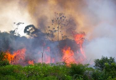 Leggen bosbranden Amazonewoud Mercosurdeal in de as?