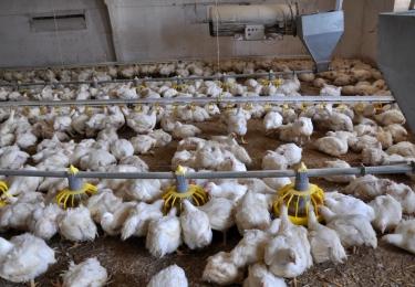 Leievoeders neemt pluimveevoederactiviteit Klaasen & Co over