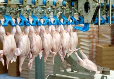 Pluimveeslachterij Nollens geteisterd door COVID-19: 68 van 200 werknemers testen positief