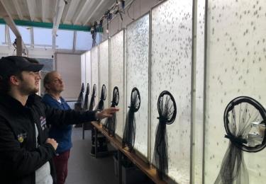 PUPA wilt pluimveehouders insecten laten kweken