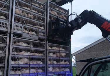 Voorlopige afwending van opschorting Nederlandse vang- en laadactiviteiten ondanks handhaving NVWA